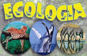 A Solución Ecoloxica da Galicia Rural