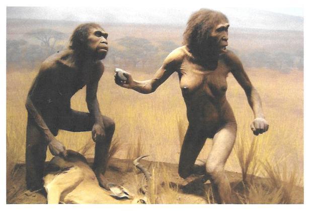 La Prehistoria. Evolución humana. La Sierra de Atapuerca. El homo antecessor.