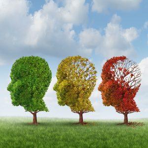 foto-4.-brain-ageing.-autumn-trees.-19444505382_6b7ac9429b_o-1