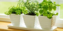 mini-jardin-hierbas-aromaticas