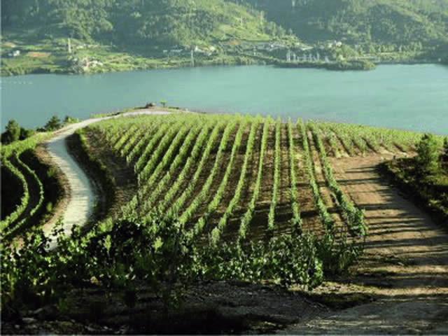 Cooperativa vitivinicola de Ribeiro