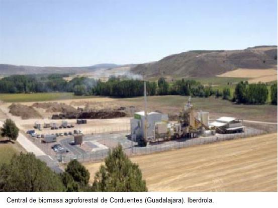 BIOCOMBUSTIBLES: ¿Solución energética o caos biológico?