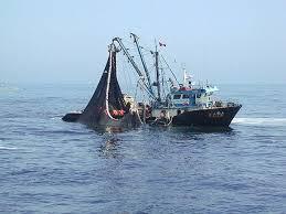 Responsabilidad social y pesca sostenible